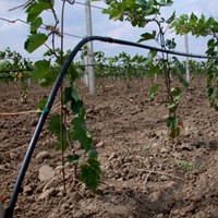 vineyard grape drip irrigation systemgrape drip irrigation kit china factory supplier