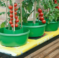 Growing Tomato Plants in Pots HT5720