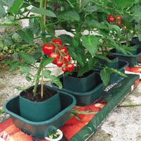 China Tomato Growing Pot Garden Planter HT5720B factory manufacturer supplier