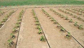 Agriculture Drip Irrigation Kit Drip Line Irrigation