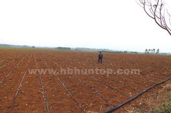 Drip Tape Irrigation System Sugarcane Farm Drip Tape